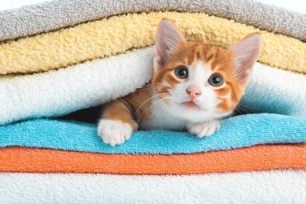 Pet Friendly Cleaning Products for Cats and Dogs