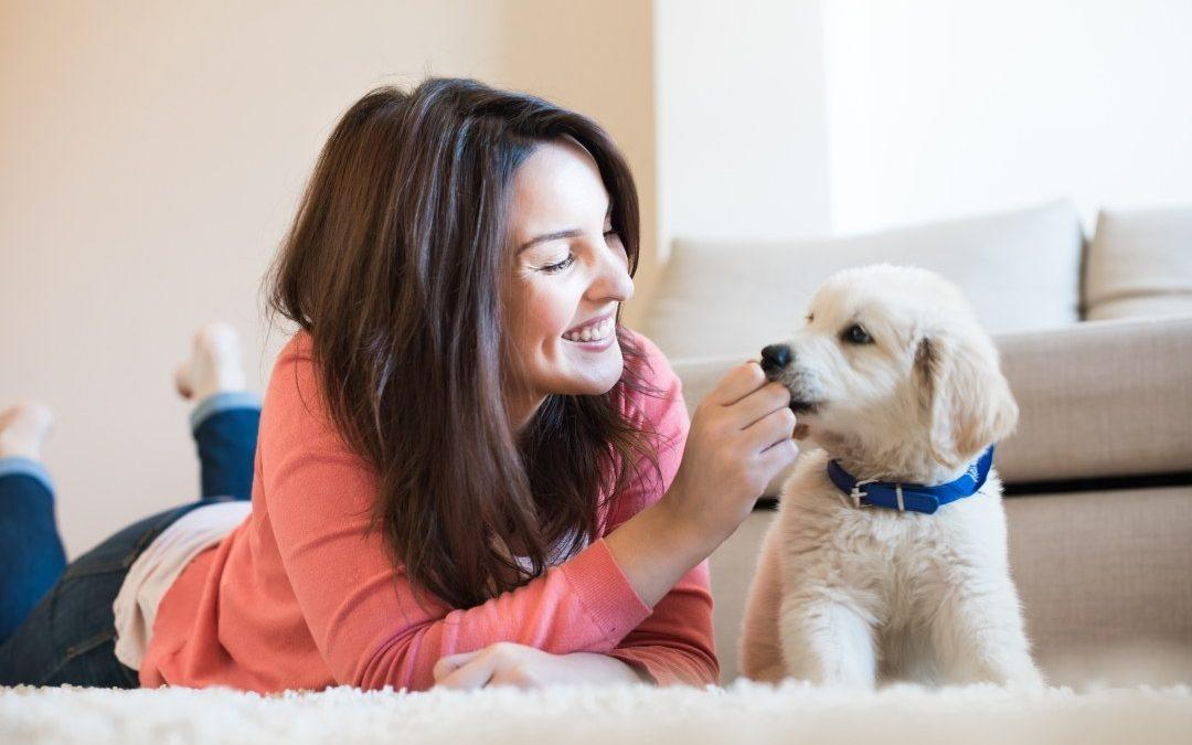 4 Most Useful Ways of Getting Rid of Pet Hair from Your Home